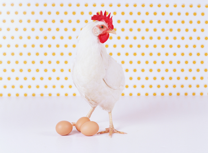 chicken_and_egg-1