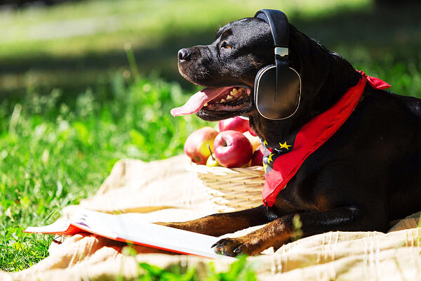 Cute dog in summer park wearing headphones
