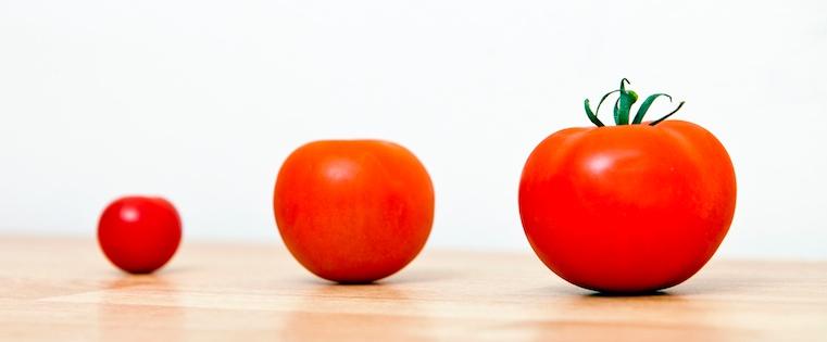 ミニトマトから立派なトマトへ