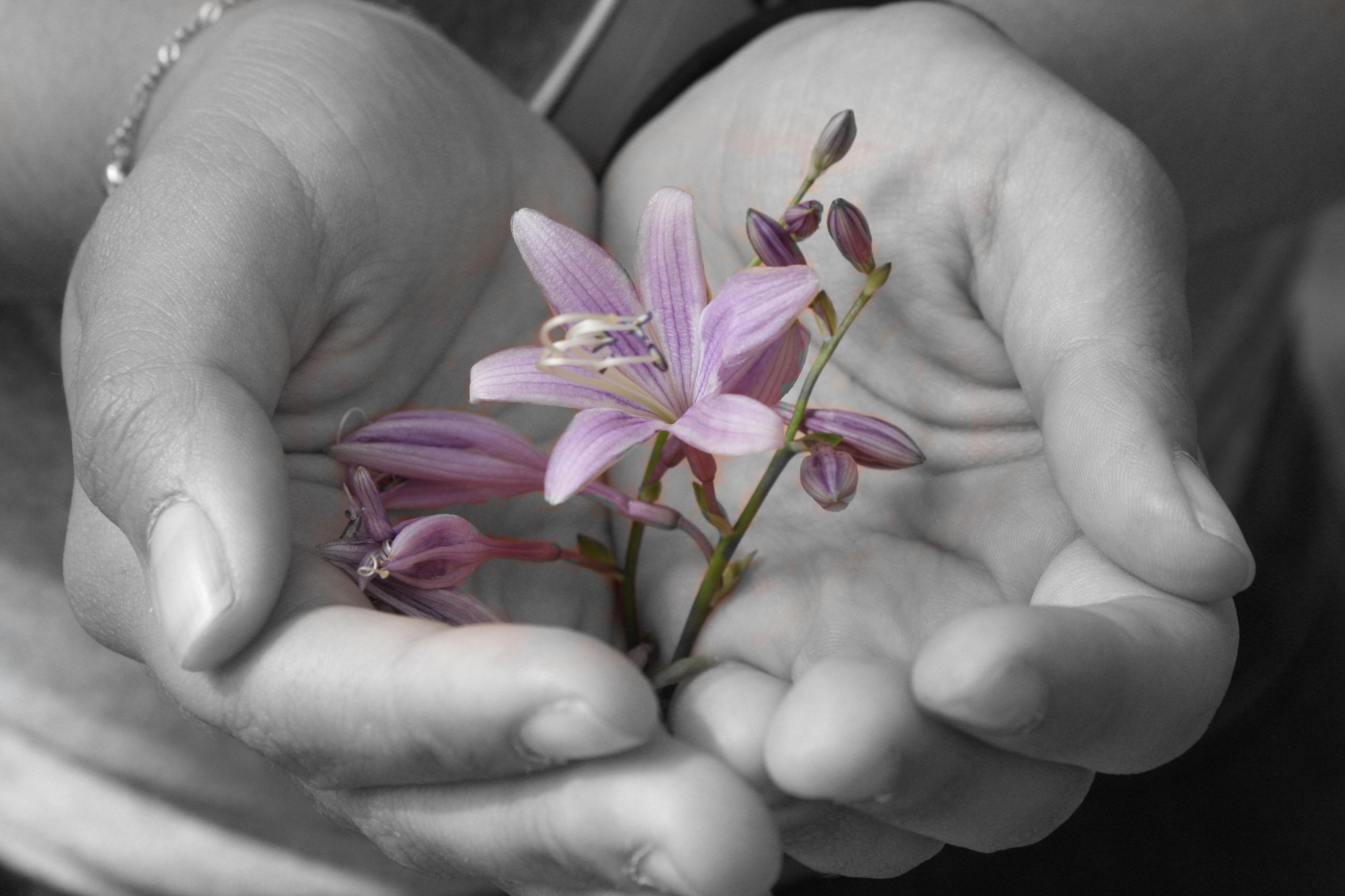 花にだけ色を付けた写真