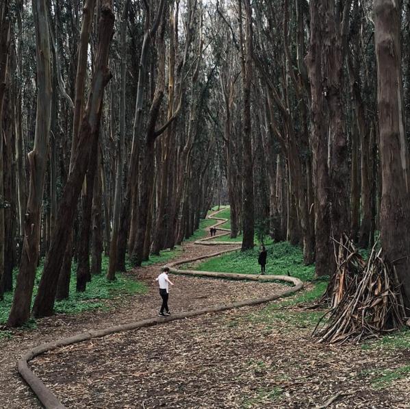 木立の中のリーディングライン