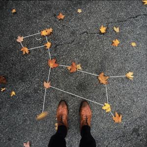 枯れ葉で作った犬の星座