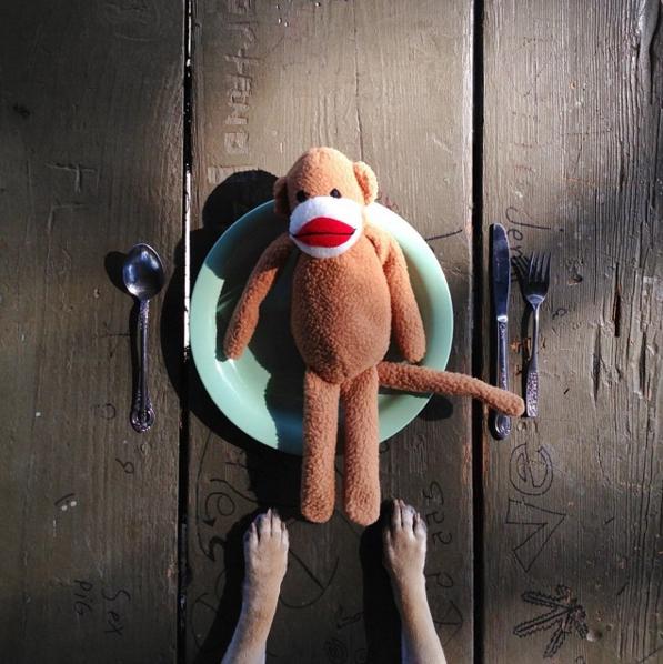 犬用おもちゃの写真
