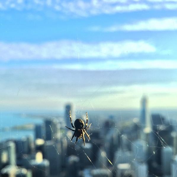 クモの写真